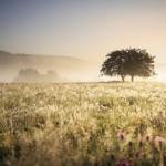 iStock_tree_field_sun