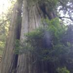redwood national park, orick, california