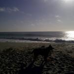 pacific ocean northern california beach