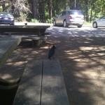 northern california big sur blue birds