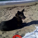 northern california coastline beach thelonious doggie