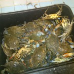 Freaky Crabs